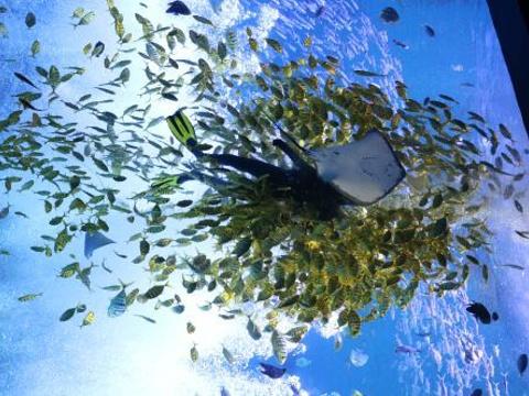 波塞冬海底世界旅游景点图片