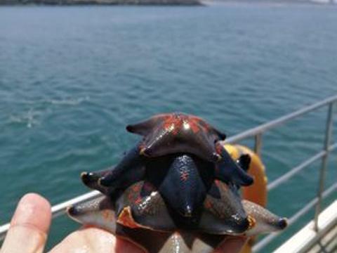 小石岛旅游景点图片
