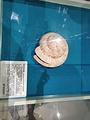 贝壳博物馆