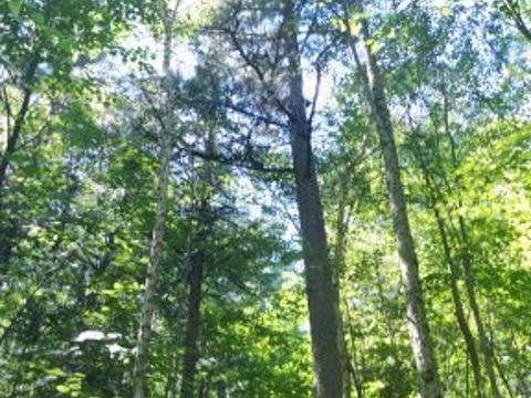 五营国家森林公园旅游景点图片