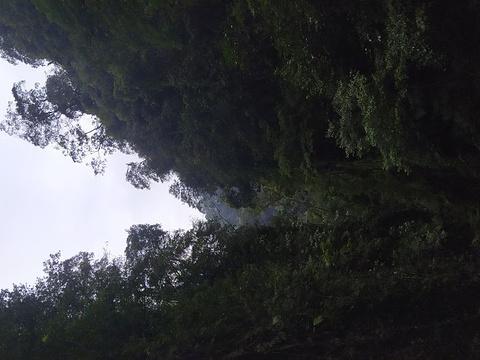 大佛禅院旅游景点图片