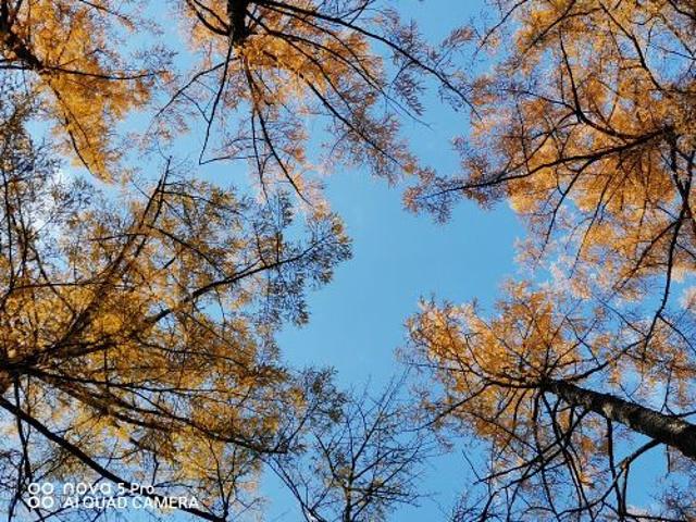 """""""天池太美了,其余几个景点也不错,推荐瀑布、绿渊潭,地下森林没有走到头,风景好空气好_长白瀑布""""的评论图片"""