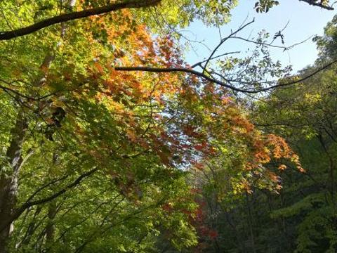 关门山国家森林公园旅游景点图片