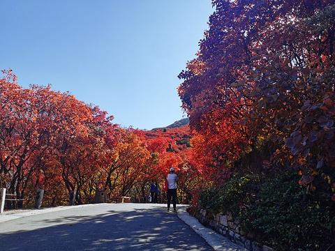 红叶谷旅游景点攻略图
