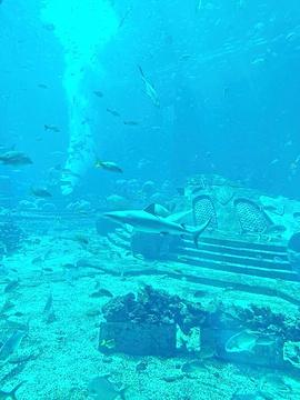 三亚亚特兰蒂斯水世界旅游景点攻略图