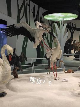 重庆自然博物馆(新馆)旅游景点攻略图