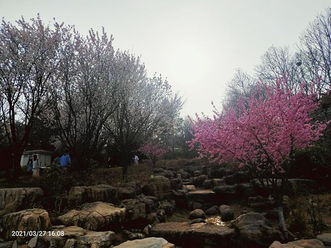 李村公园(南行)旅游景点攻略图