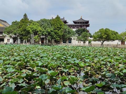 二龟听法石旅游景点图片