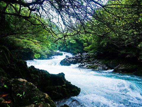 茂兰喀斯特森林旅游景点图片