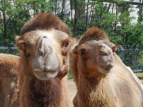 大连森林动物园旅游景点图片