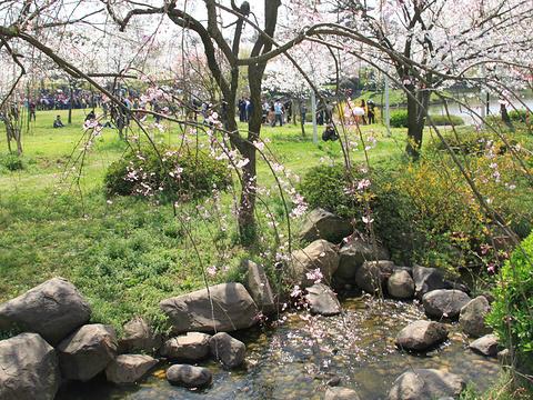 桃花源旅游景点图片