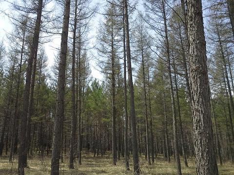 御道口草原森林风景区旅游景点攻略图