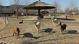 石家庄市动物园