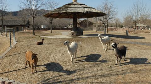 石家庄市动物园的图片