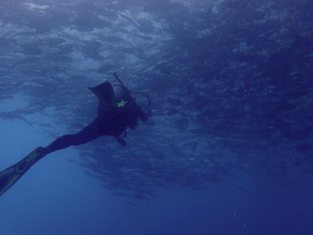 斗湖 马布岛 诗巴丹潜水之旅