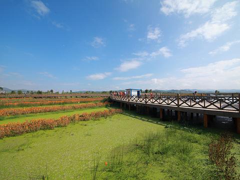草海旅游景点图片