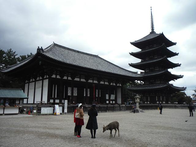 """""""奈良首推的景点就是兴福寺_兴福寺""""的评论图片"""