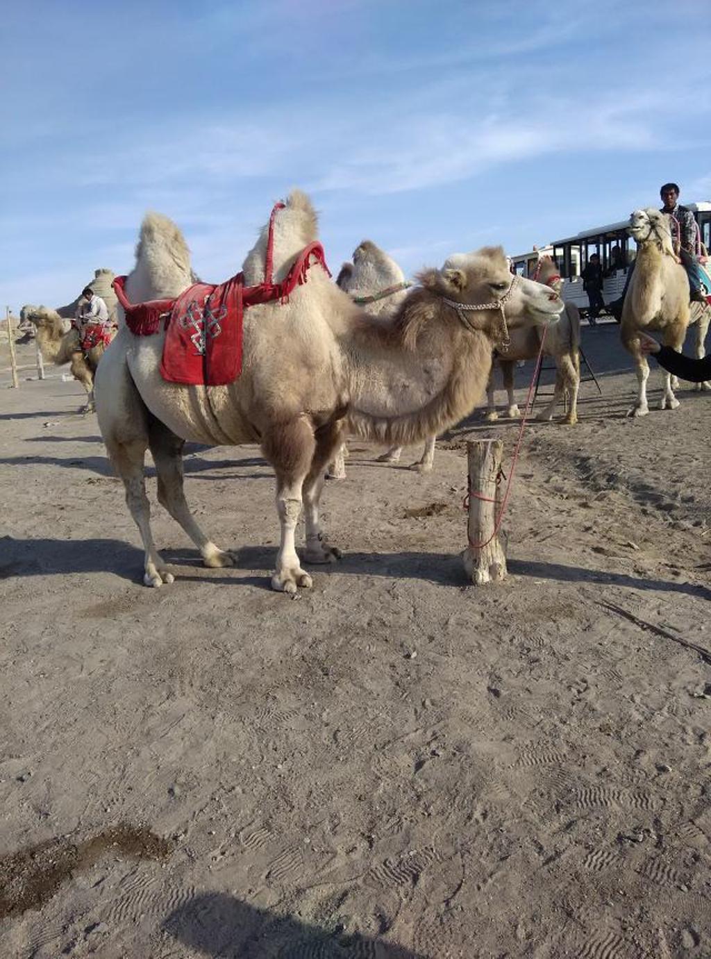 新疆克拉玛依魔鬼城。。说走就走的旅行