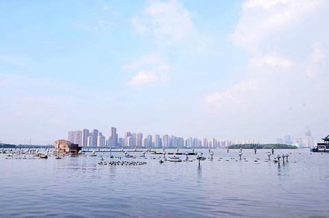 金鸡湖的图片