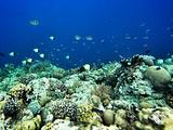洛克群岛旅游景点攻略图片