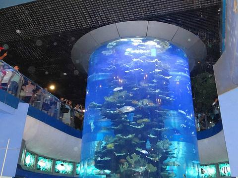 青岛海底世界旅游景点图片