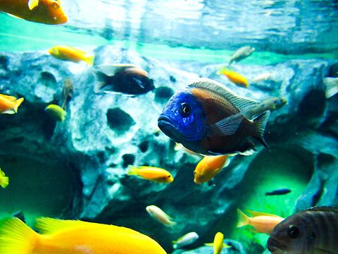 常州金鹰海洋世界旅游景点图片