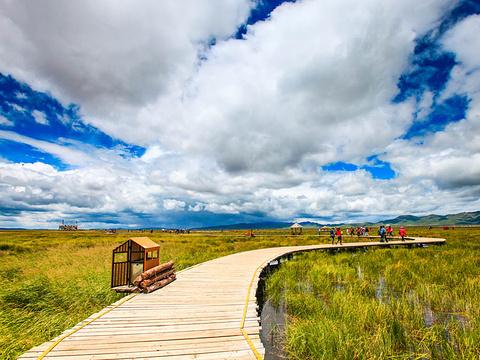 若尔盖花湖旅游景点图片