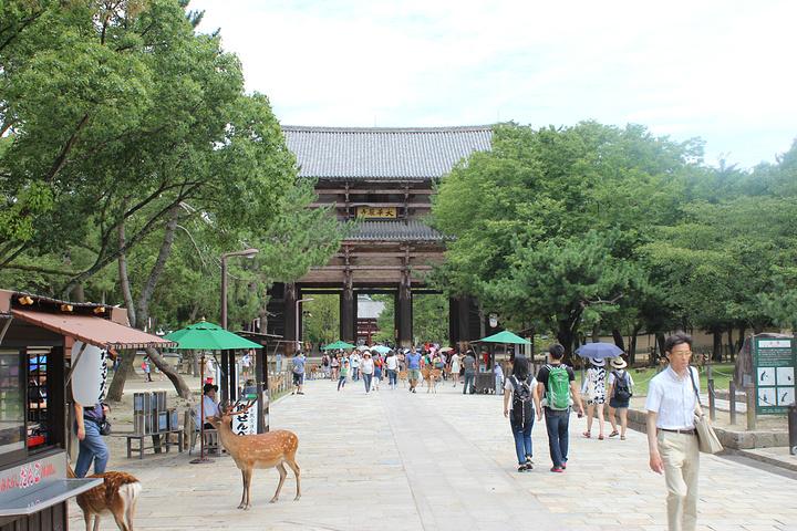 """""""做奈良的近铁是最方便的_东大寺""""的评论图片"""