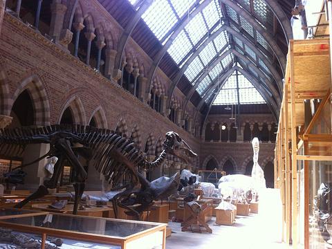 牛津大学自然史博物馆旅游景点图片