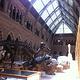 牛津大学自然史博物馆