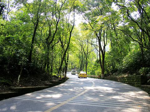 歌乐山国家森林公园旅游景点图片
