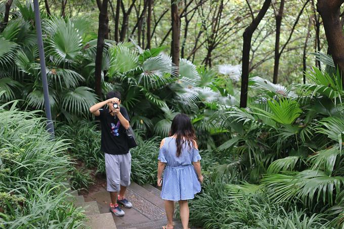 湿地公园,景点,重庆图片