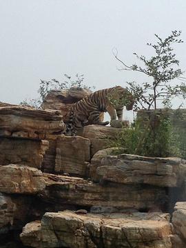 上海野生动物园旅游景点攻略图
