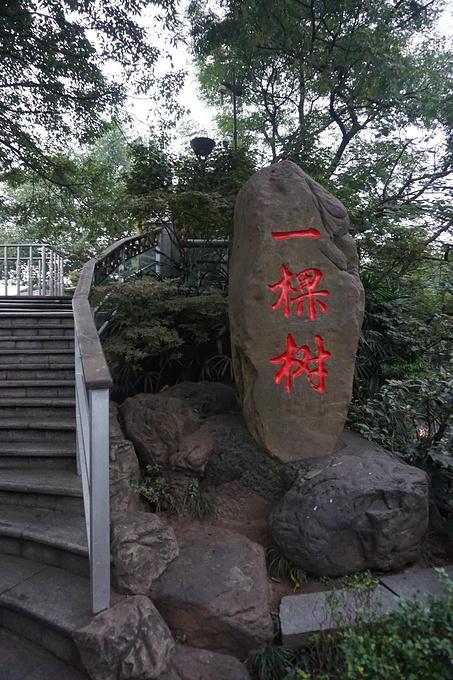 南山一棵树观景台图片