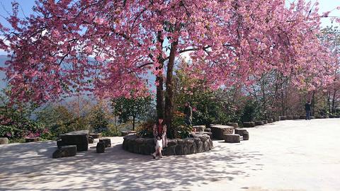 樱花谷森林温泉风景区
