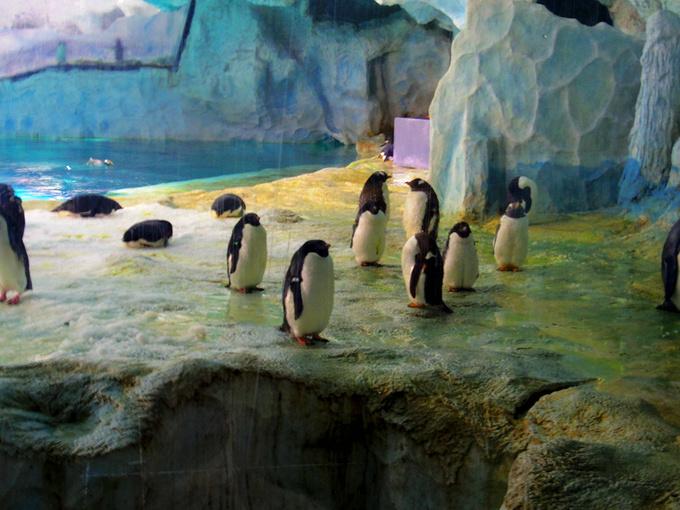 企鹅馆图片