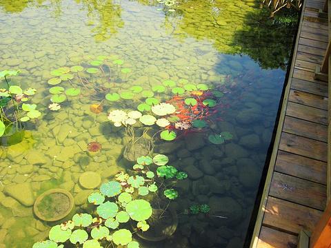 青岛世界园艺博览园旅游景点攻略图