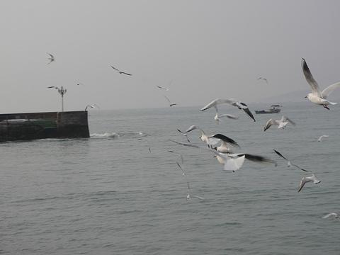 青岛湾旅游景点图片