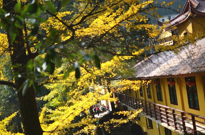 """""""这里绝对是成都市区及近郊范围内赏银杏的最好地点,而且不需要门票_白岩寺""""的评论图片"""