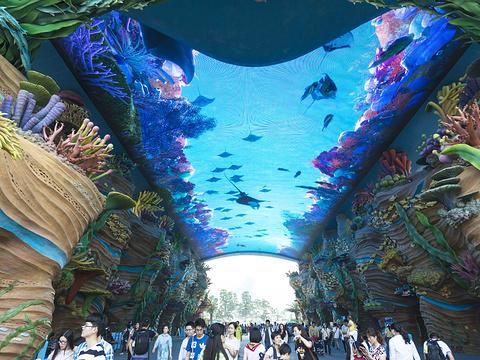 珠海长隆海洋王国旅游景点图片