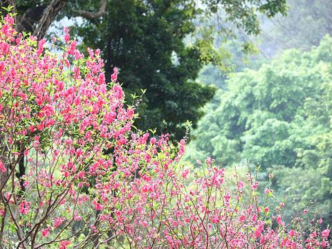桃花涧旅游景点图片