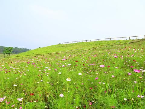 木兰草原旅游景点图片