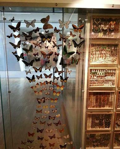 """""""是墨尔本之行非常值得去的一个景点_墨尔本博物馆""""的评论图片"""