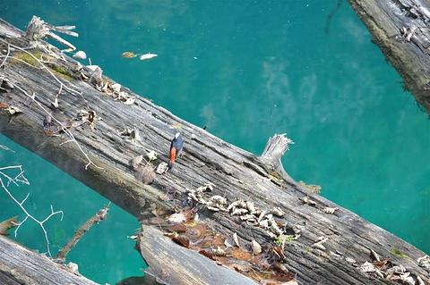 五彩池旅游景点澳门新葡亰亚洲图
