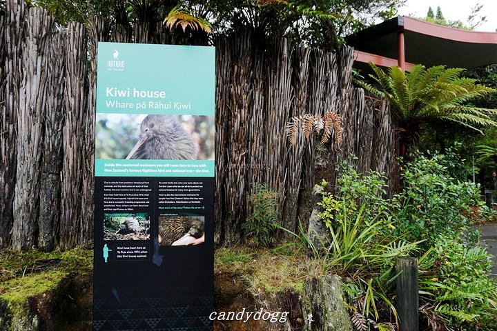 """""""罗托鲁瓦是著名的火山地热城,独特的地理环..._奥希内穆图毛利文化村""""的评论图片"""