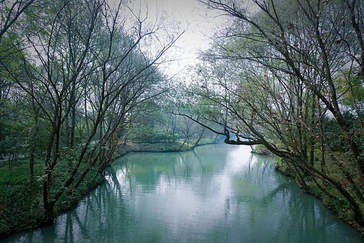 """""""着实算不上这里最美丽的景色,正好处于夏天已逝,冬日未来,既看不到繁华盛景,也欣赏不到唯美雪景的..._西溪国家湿地公园""""的评论图片"""