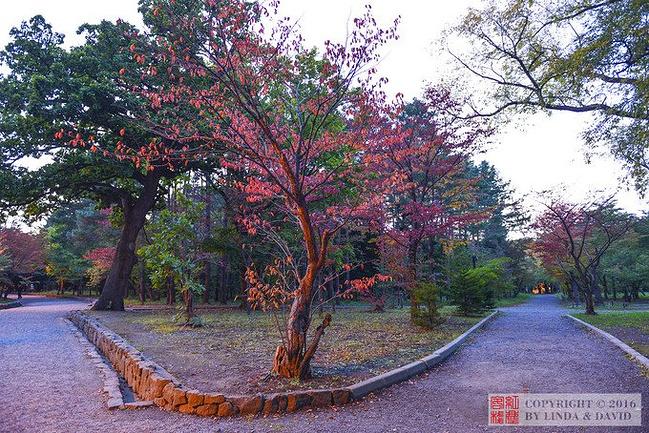 圆山公园图片