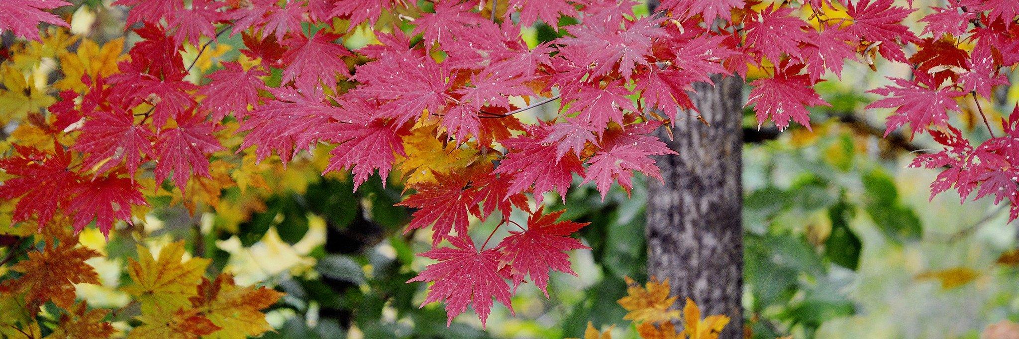 深秋中的一抹红-辽宁奇景