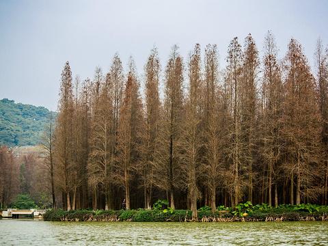 星湖旅游景区旅游景点图片