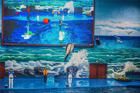 多彩贵州城极地海洋世界的图片